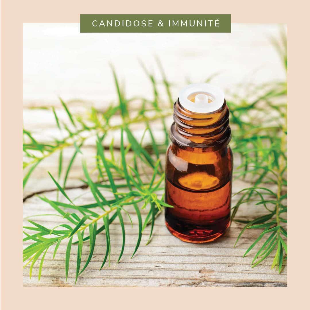 L'incontournable huile essentielle d'arbre à thé