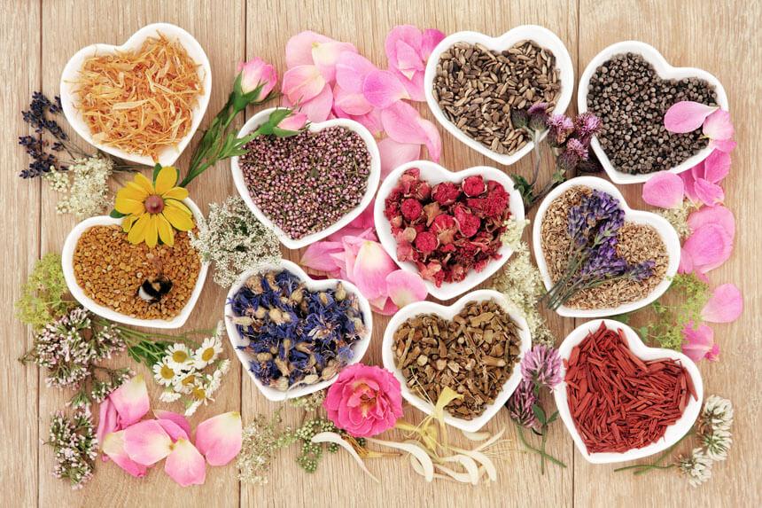 Diverses plantes et fleurs